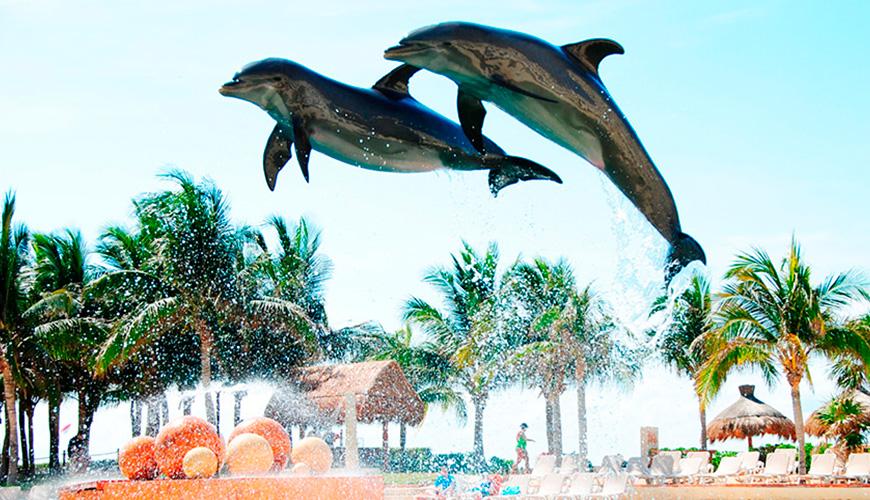 En Cancún no te pierdas el nado con delfines