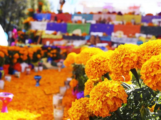 Sin duda una de las flores más representativas de México es el cempasúchil, esto debido a su color amarillo intenso y a su tradicional uso en las ofrendas de Día de Muerto, descubre un poco más acerca de esta flor en el especial de hoy.