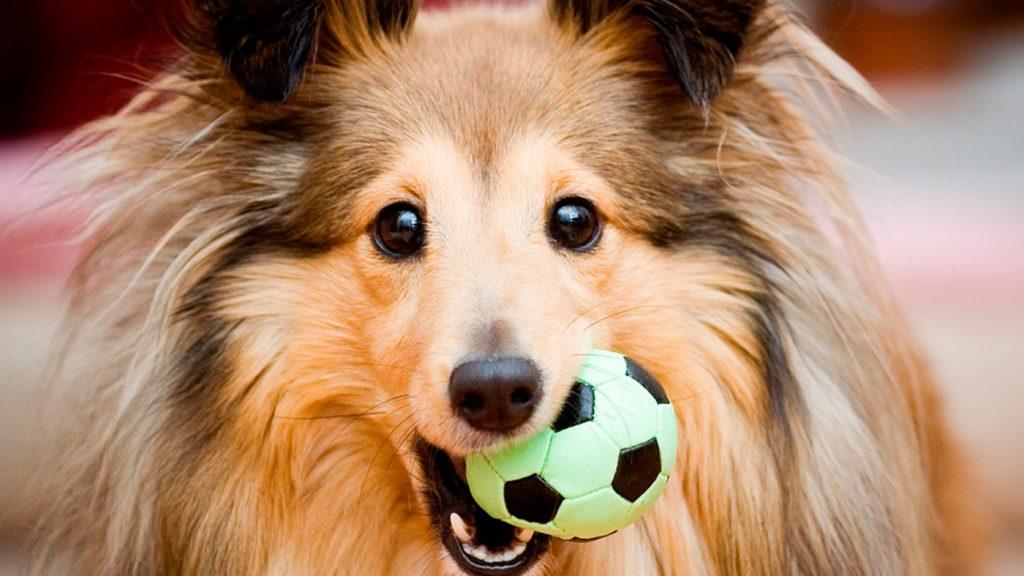 <h1>Tips para cuidar a tu mascota</h1>