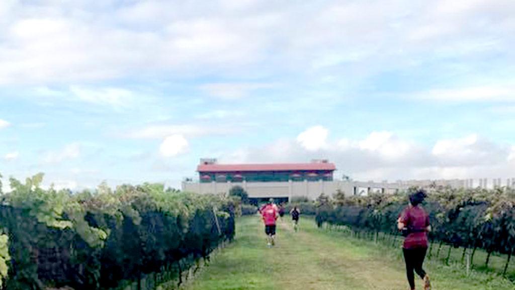 <h1>Bernal será escenario de la carrera X Trail a campo traviesa entre viñedos</h1>