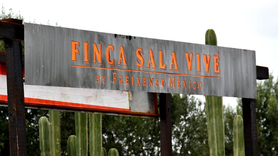 <h1>Finca Sala Vivé, una experiencia vinícola donde los invitados son los sentidos</h1>