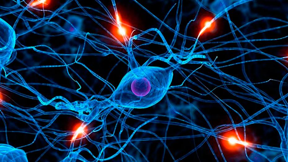 <h1>Lo último: programan células madre del cerebro</h1>